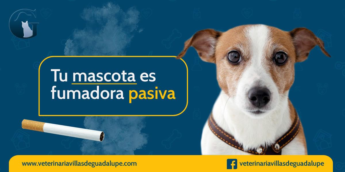 cigarrillo_mascotas.jpg