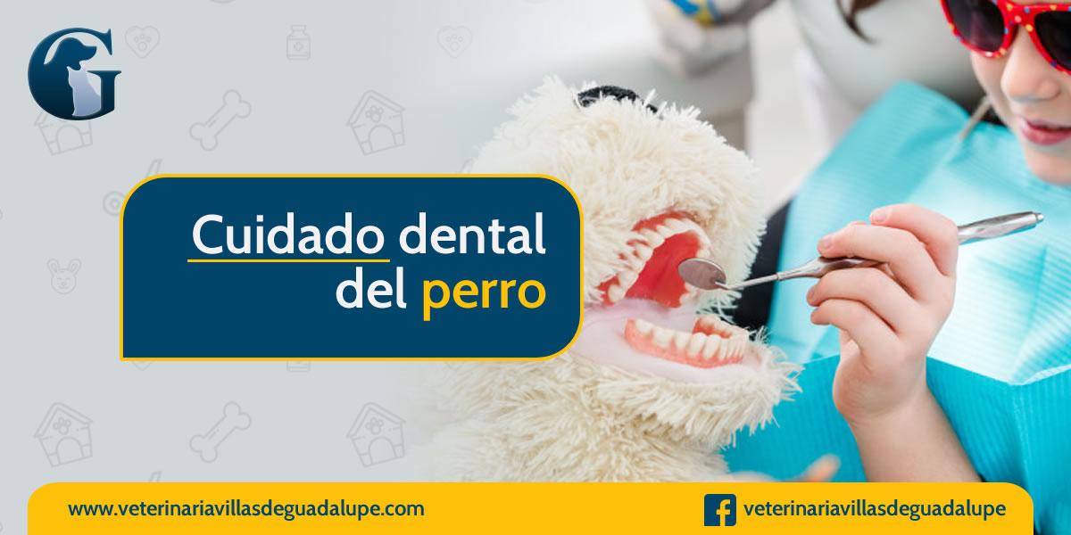 cuidado_dental_mascotas.jpg