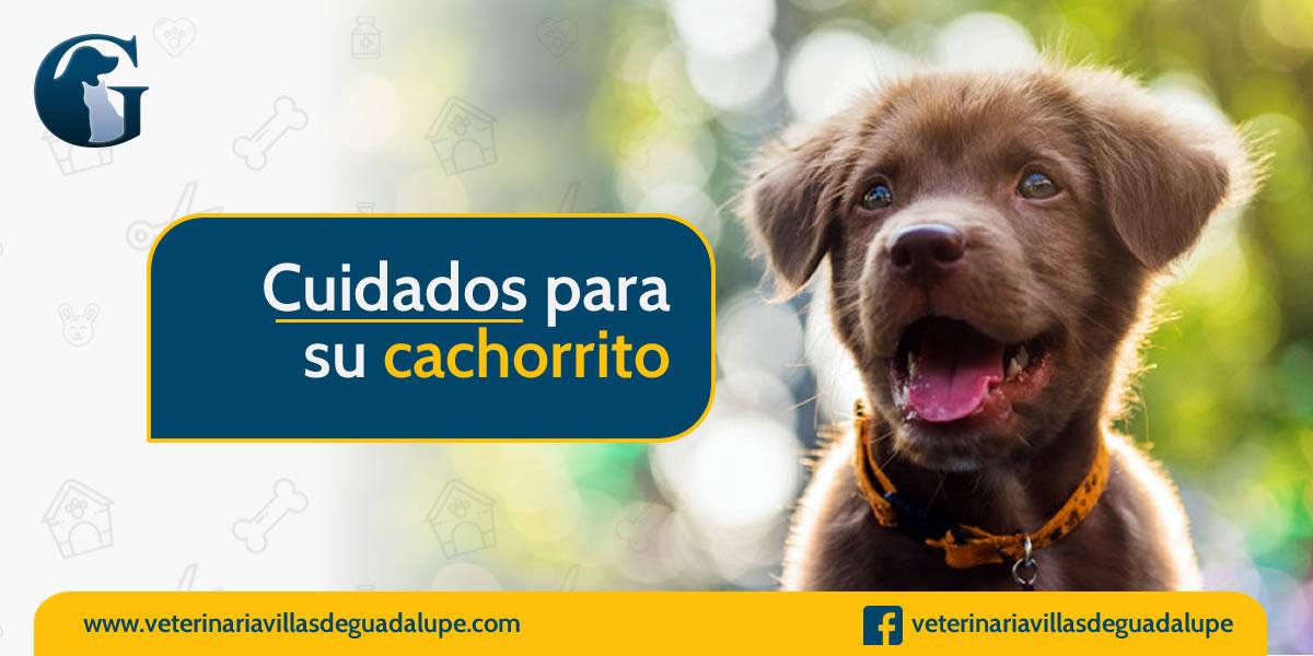 cuidados_cahorros.jpg